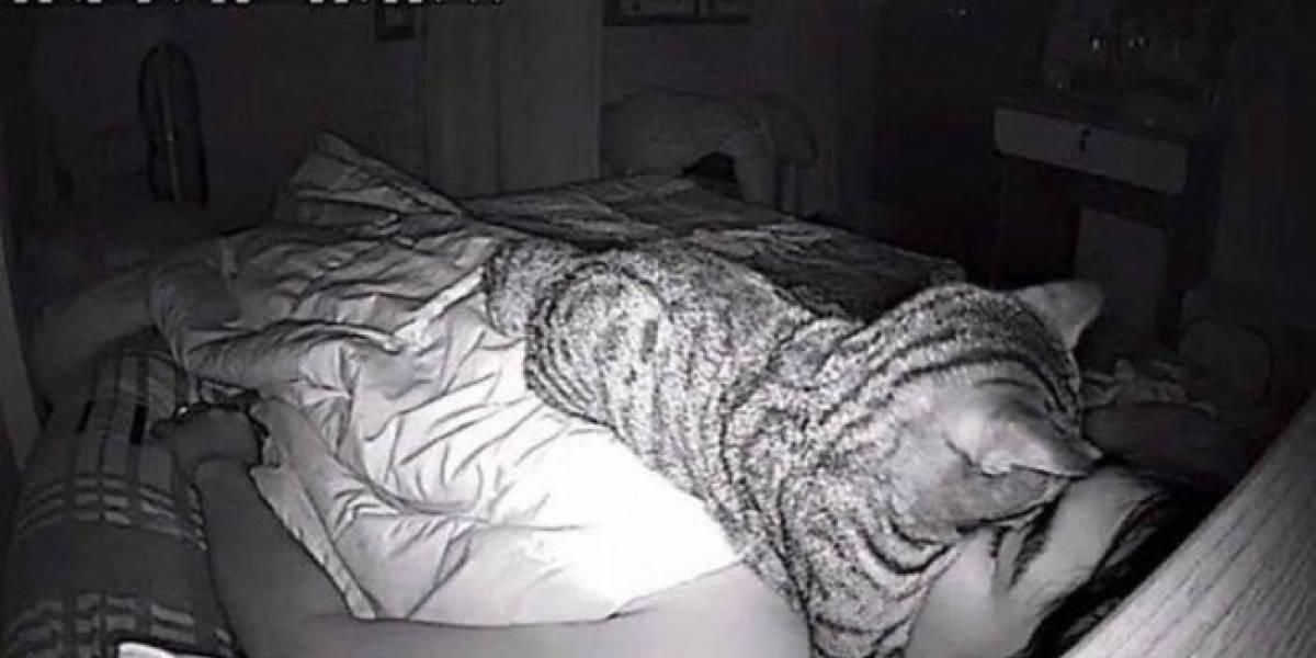 Homem descobre que problema respiratório durante o sono era na verdade o gato dormindo em seu rosto