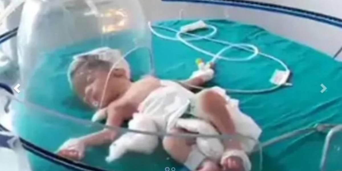 (Video) Perros callejeros rescatan a una bebé recién nacida abandonada en un desagüe