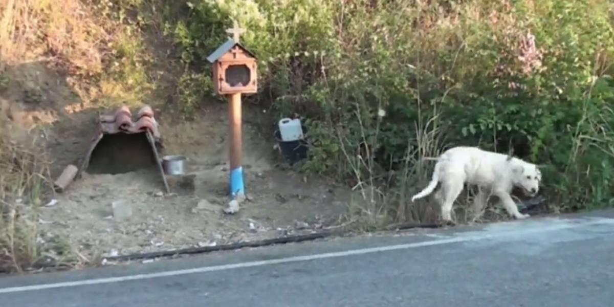 Cão se muda para local da morte de dono na Grécia