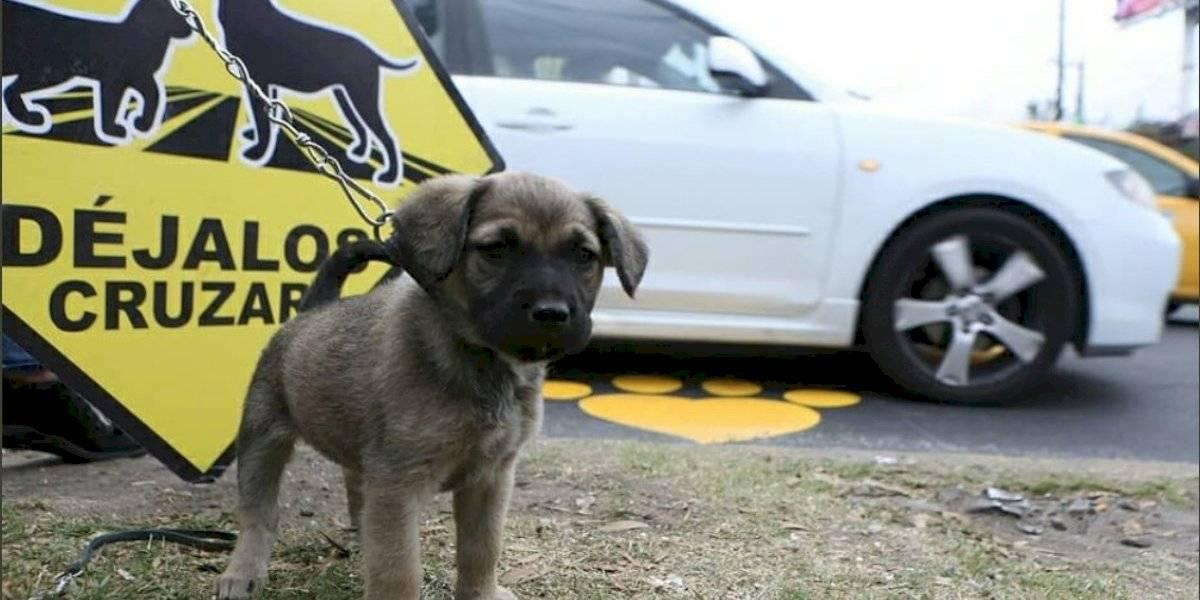 En Quito se recogen 20 cadáveres de perros a diario, según Municipio