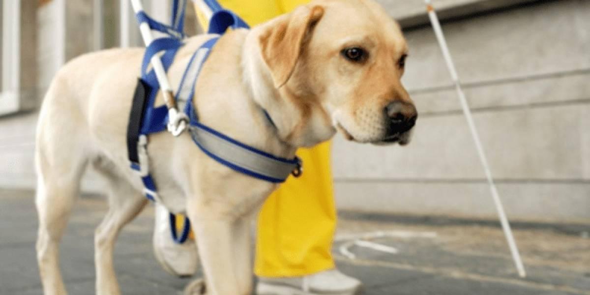 App de transporte deverá se explicar ao Procon sobre motorista que recusou levar cão guia