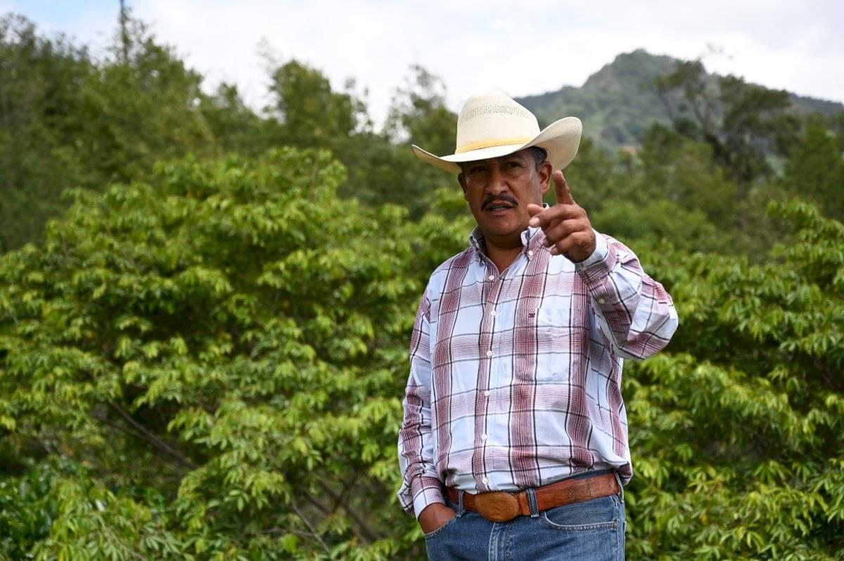 Caficultores guatemaltecos sopesan volver a EE. UU. por crisis del grano