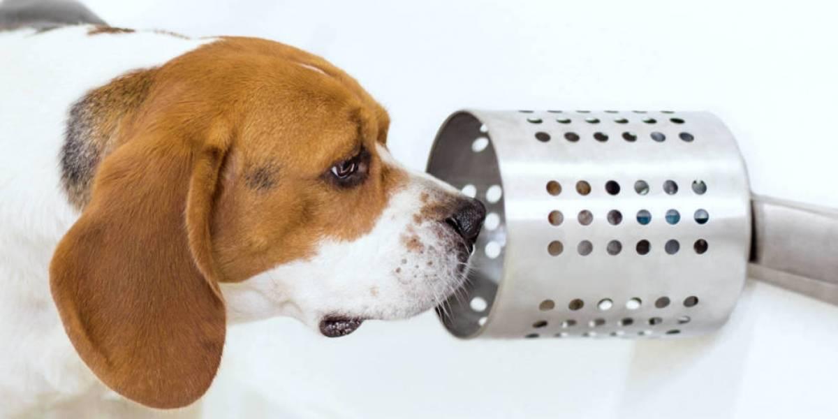 Súper amigos del hombre: adiestrarán perros para la detección prematura del cáncer en Chile
