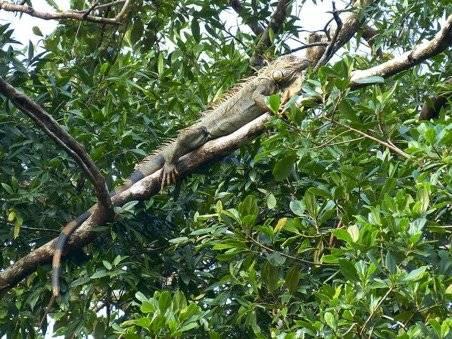 Parque Iguanas