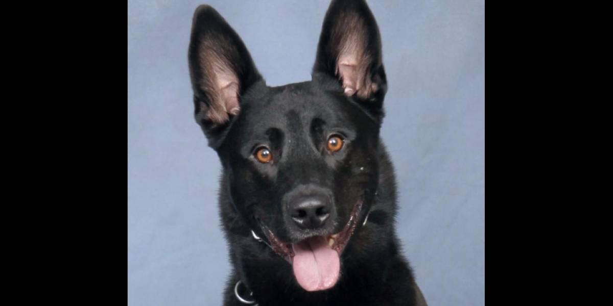 """""""Ha sido un incidente devastador"""": uniformado mató de un disparo a un perro policial que lo mordió por error tras una """"serie de eventos trágicos"""""""
