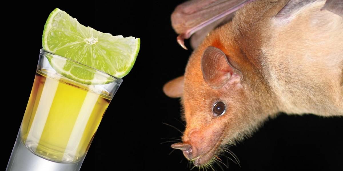 La producción de tequila logra salvar a una especie en extinción de murciélago