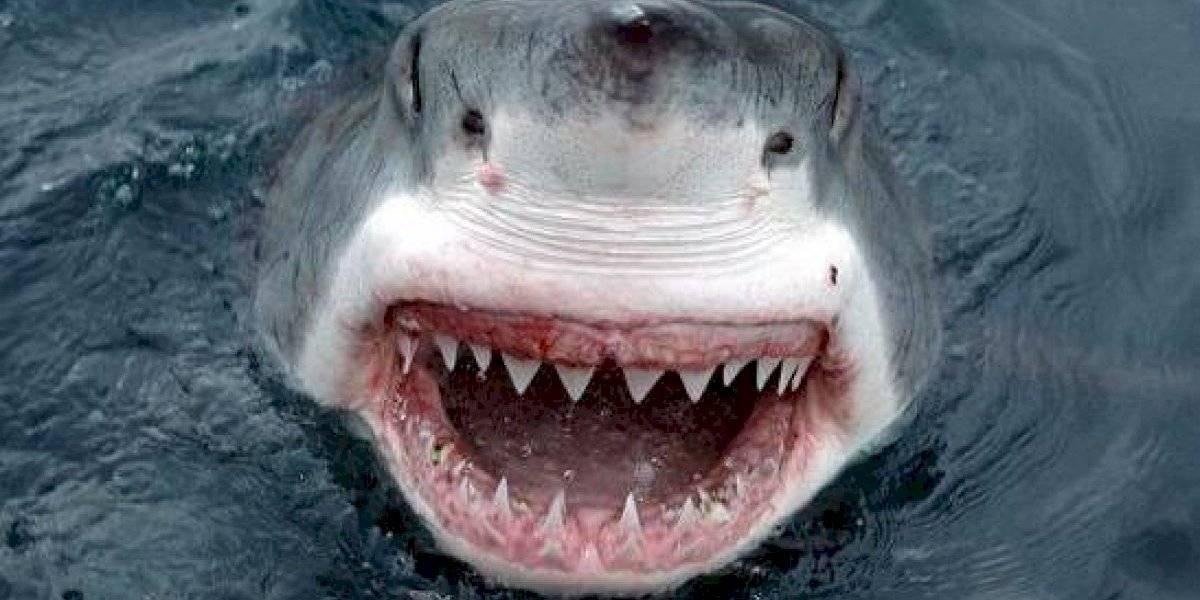 Vídeo: família pescava tranquilamente até ser surpreendida por um grande Tubarão branco
