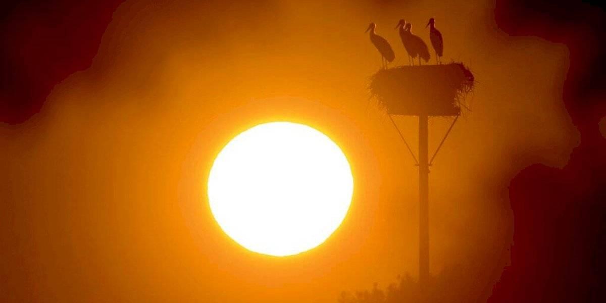 El enero más caluroso en 140 años: científicos en alerta por rápido aumento de la temperatura mundial y sus devastadores efectos