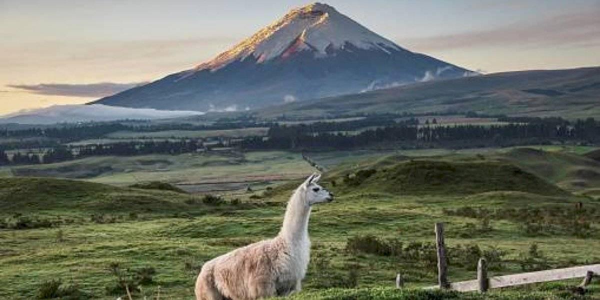 Ecuador usará 300 memes para promocionar el turismo en el país