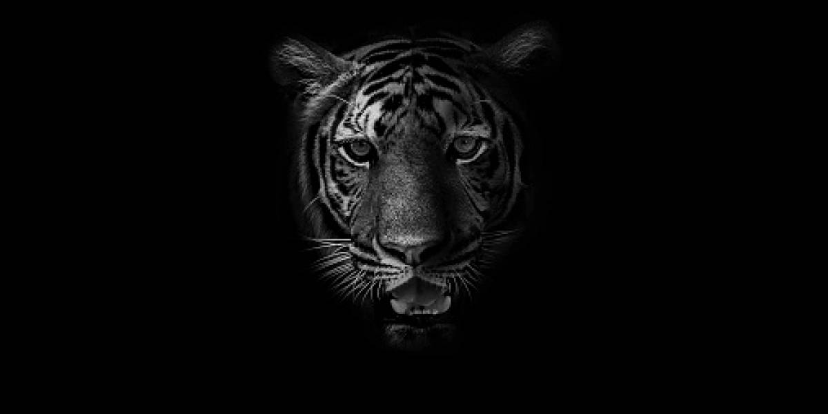 Horrendo hallazgo: encuentran siete tigres congelados al interior de un automóvil de un traficante de animales