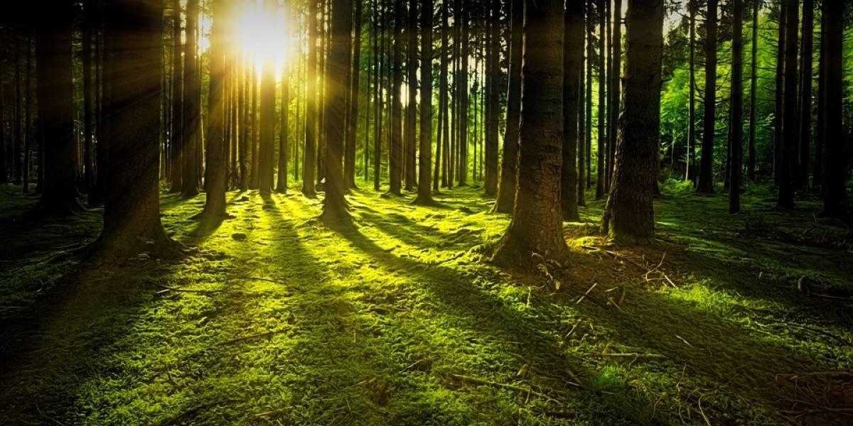No todo está perdido: Satélites de la NASA captaron cómo se regenera un bosque que se creía muerto