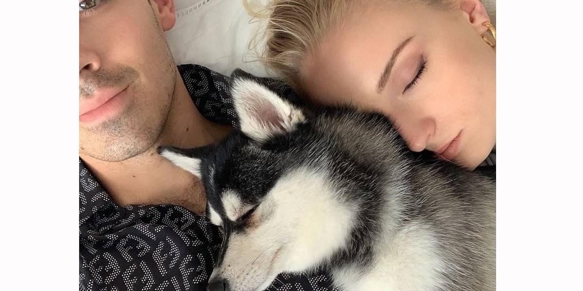 Cachorro de Joe Jonas e Sophie Turner morre após ser atropelado em Nova York