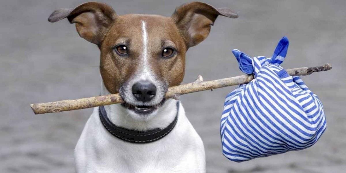 ¿Buscas a tu nuevo mejor amigo? Ñuñoa recibe este domingo una nueva jornada de adopción canina