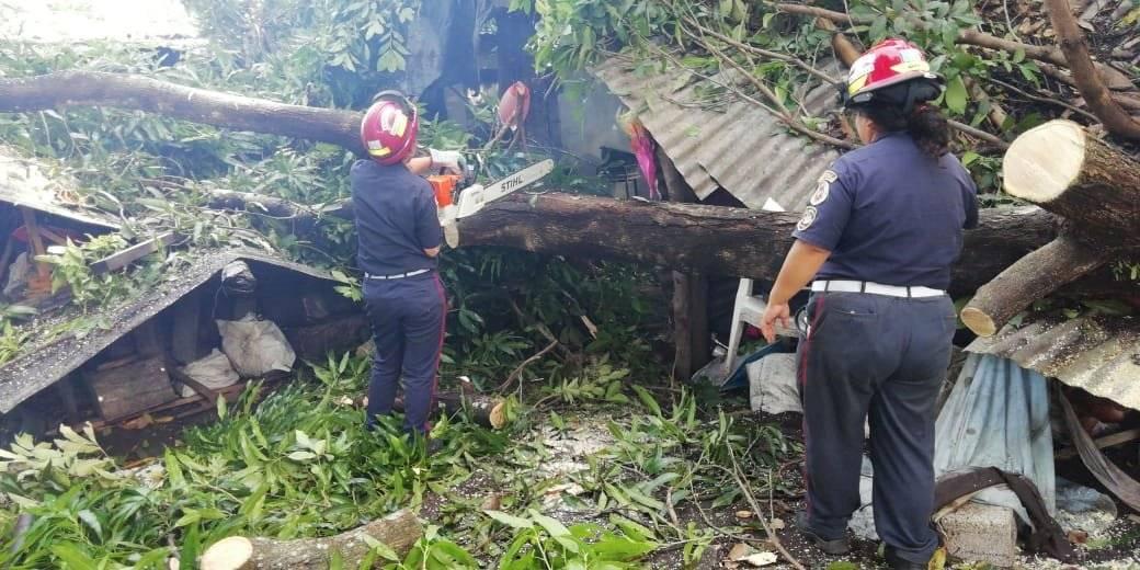 árbol cae sobre vivienda en Escuintla