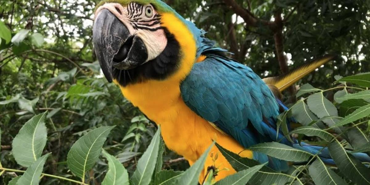 Vuelven a su hábitat más de 200 animales silvestres que fueron rescatados en Bogotá