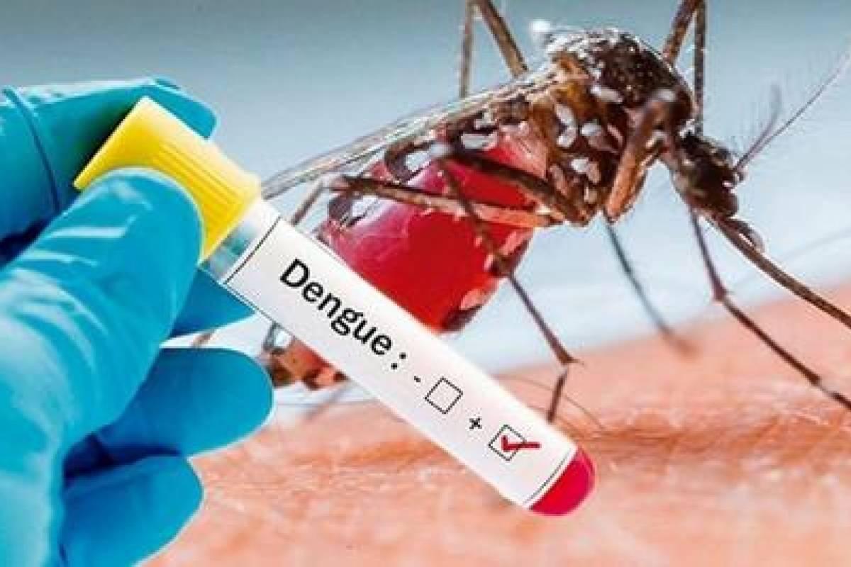 PRSC pide declarar el estado de emergencia por casos de dengue | Metro  Republica Dominicana