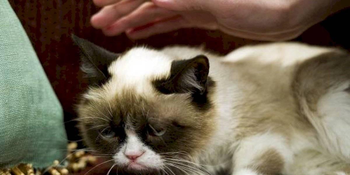 La ciencia revela importante enigma: ¿cómo se debe acariciar un gato para evitar su ira?