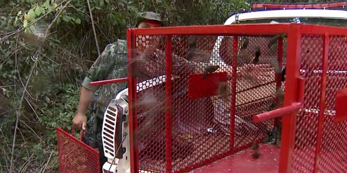 Homem é preso com 3 macacos e 136 aves silvestres em ônibus no interior paulista