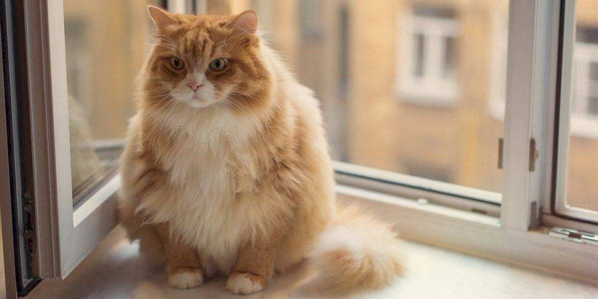 Desungulación de gatos: Así debes denunciar esta terrible práctica contra los felinos