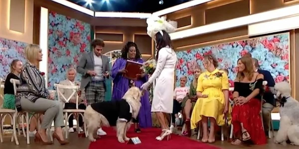 """El """"matrimonio"""" que sorprendió a todo el mundo: mujer se casa con su perro y la boda es transmitida en vivo por la TV"""