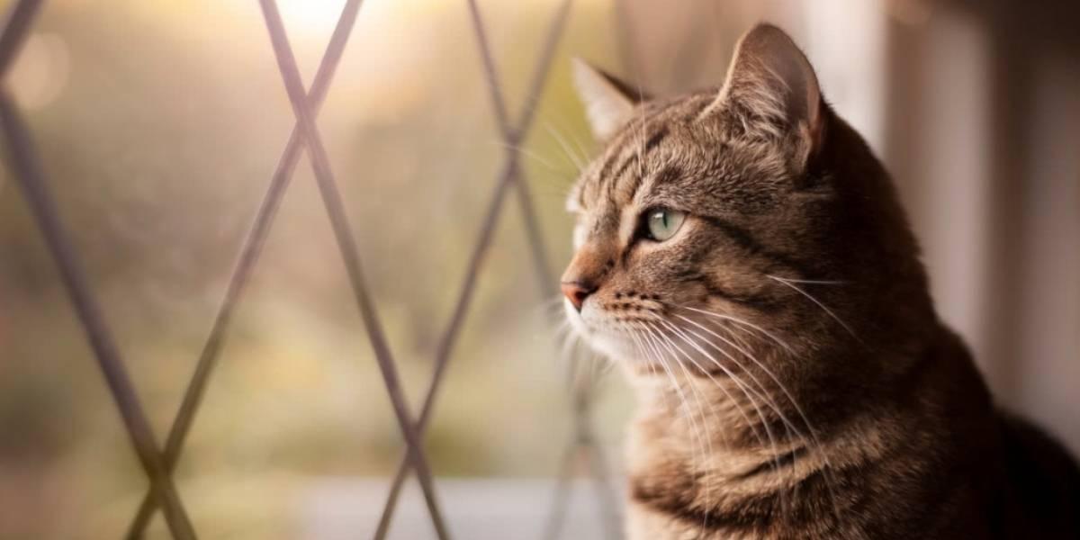 PDI investiga impactante denuncia de maltrato a gato: habría sido despellejado y disecado