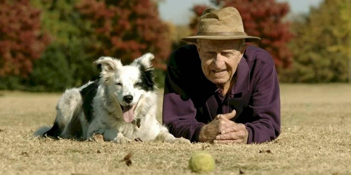 Muere el perro más inteligente del mundo