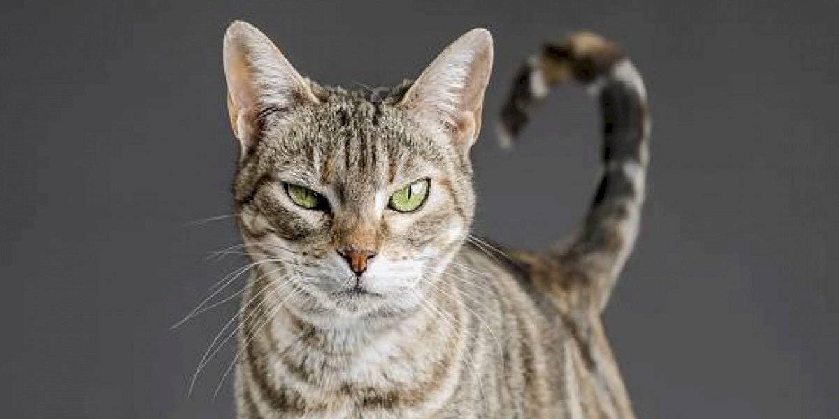 Mujer es sentenciada a prisión por alimentar a gatos callejeros