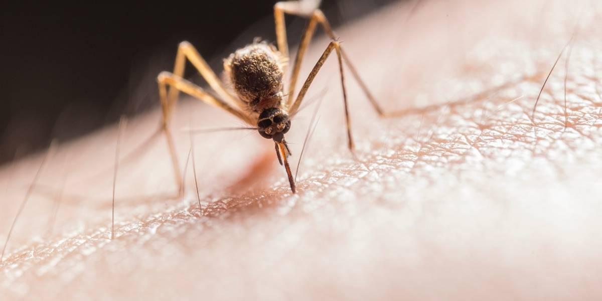 Los mosquitos están empezando a propagar una peligrosa enfermedad mortal que ataca el cerebro