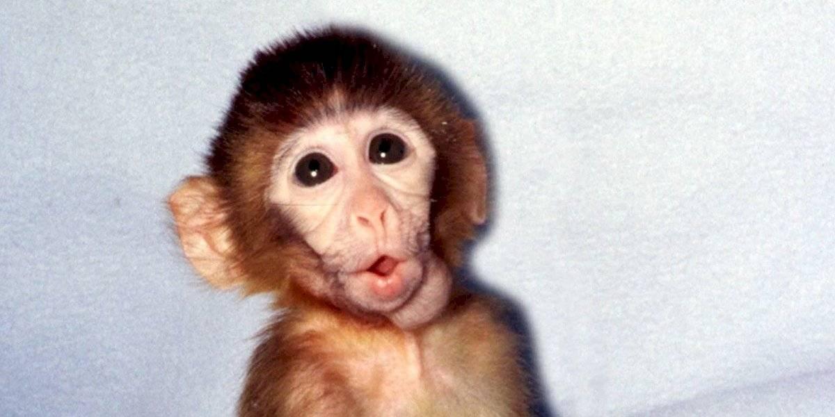 Científicos trabajan para que la donación de órganos de un animal a un humano sea posible