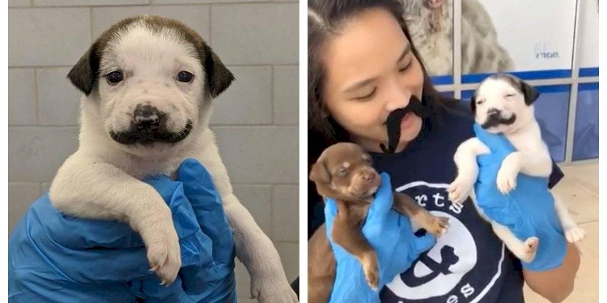 """Cachorro fue abandonado junto a su madre y sus 10 hermanos y ahora se transformó en toda una sensación en redes sociales por su increíble """"bigote"""""""