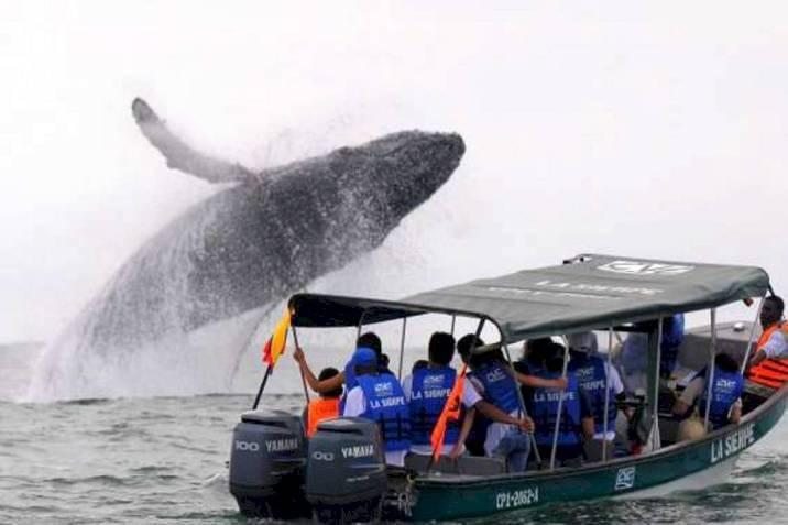 Avistamiento de ballenas Ecuador