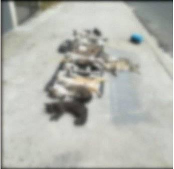 17 gatos envenenados en Manta