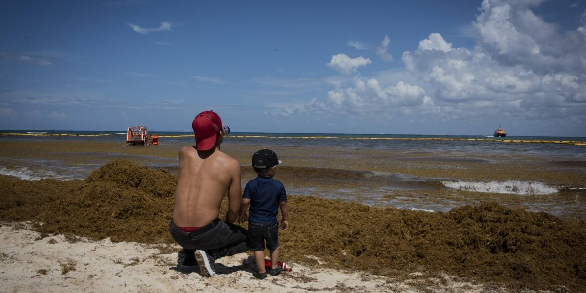 Quintana Roo niega muerte masiva de tortugas por sargazo