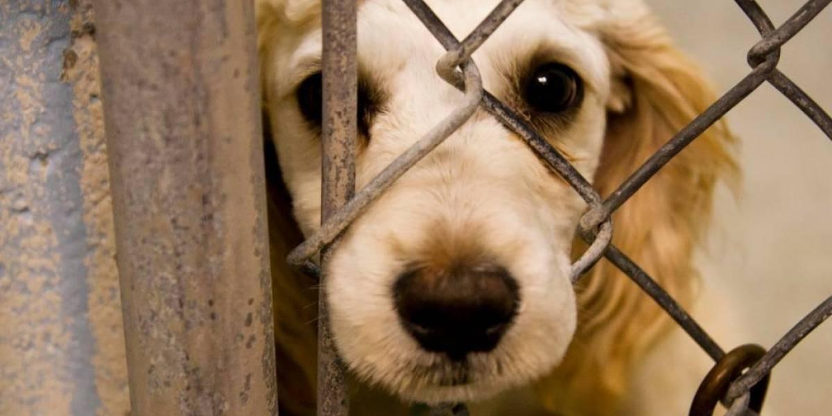 Un perro muere encadenado y arrastrado por una volqueta en la vía Cuenca- Azogues