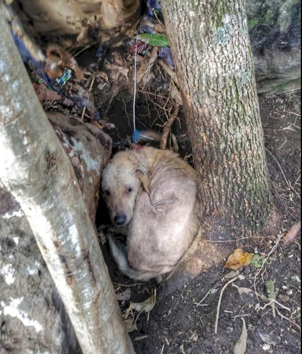 Rescate de perros