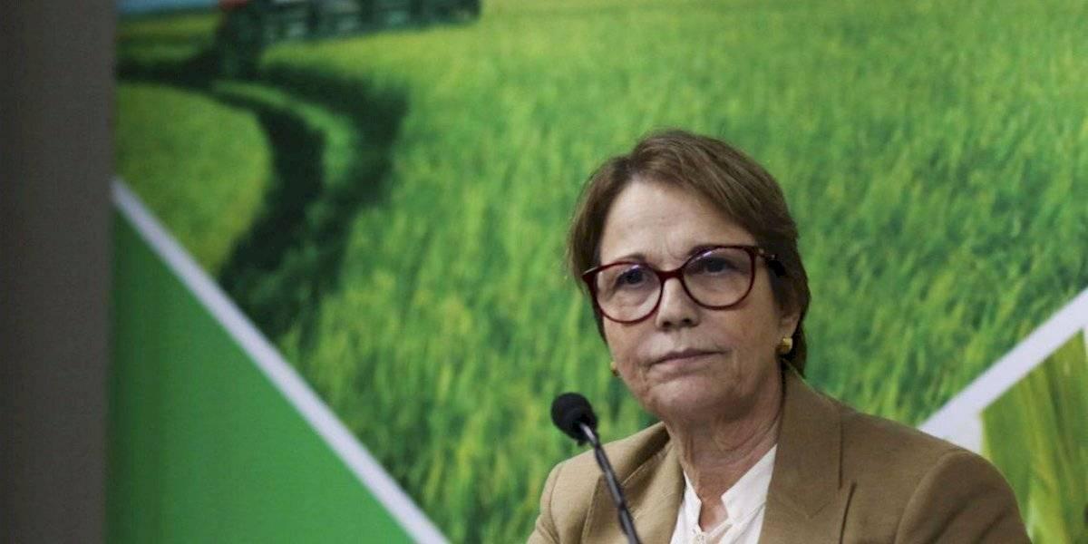 Ministra da Agricultura promete baixar preço do arroz