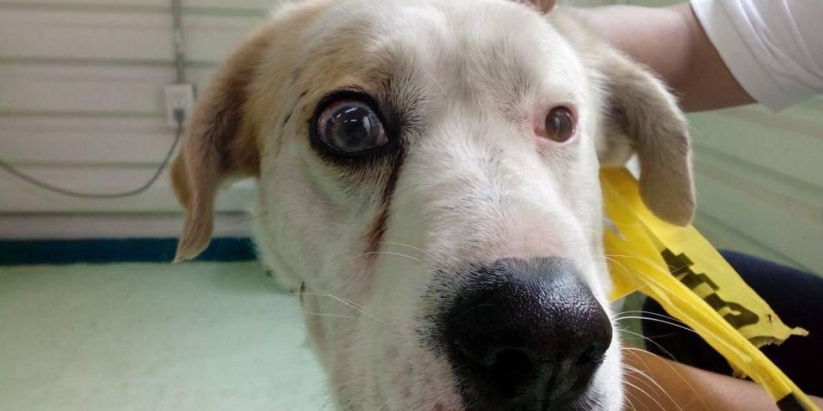 Donan cirugía de glaucoma a perro rescatado en el Metro