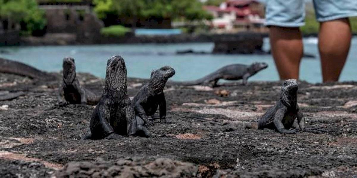 Pidieron acabar con ellas y unos niños lo hicieron de la peor manera: torturan hasta la muerte a una iguana y graban el brutal ataque