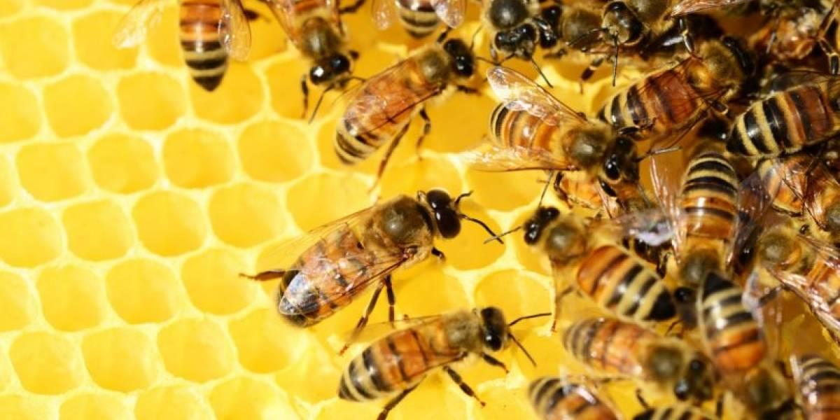 Peligra el bosque nativo y la miel: la sequía y el cambio climático ya habría asesinado a la mitad de las abejas chilenas