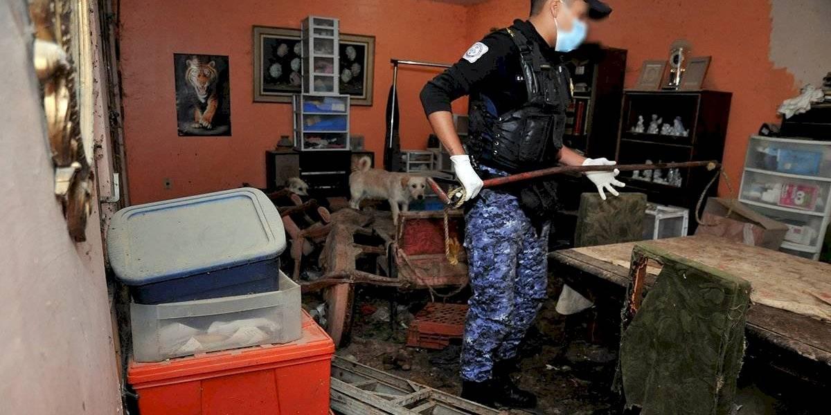 Rescatan a 55 perros maltratados en la GAM
