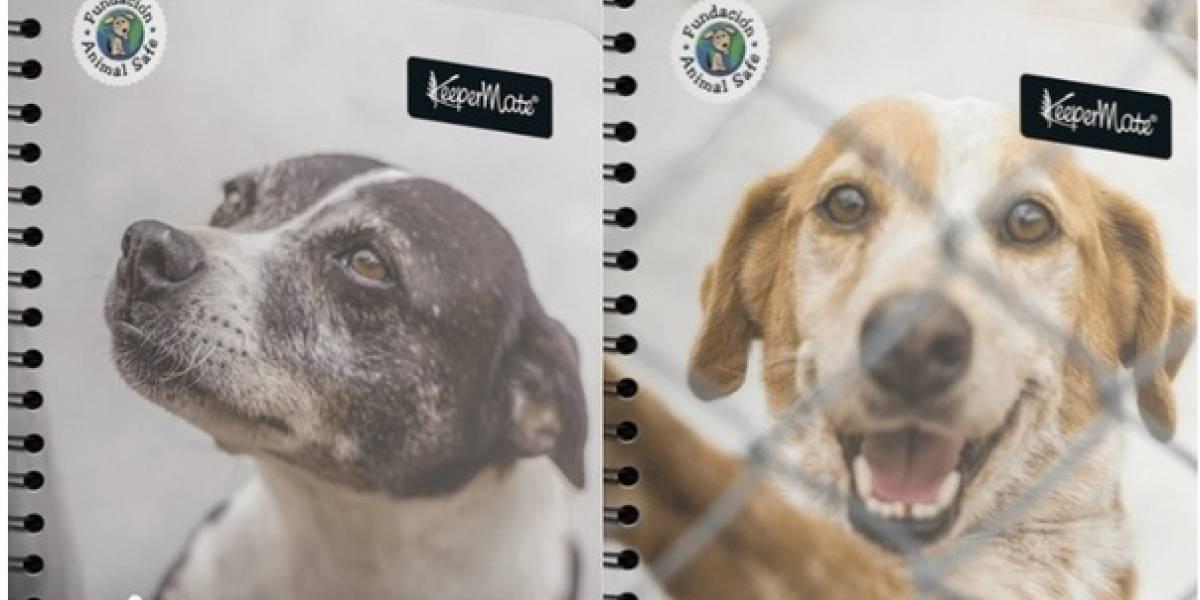 Animales abandonados estarán en las portadas de cuadernos