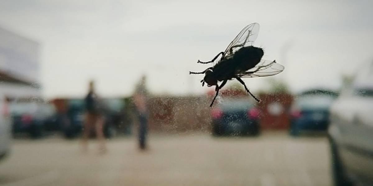 ¿Colgar letreros con el número 58 espanta a las moscas? Revelan la verdad tras curiosa leyenda urbana que se volvió viral en redes sociales