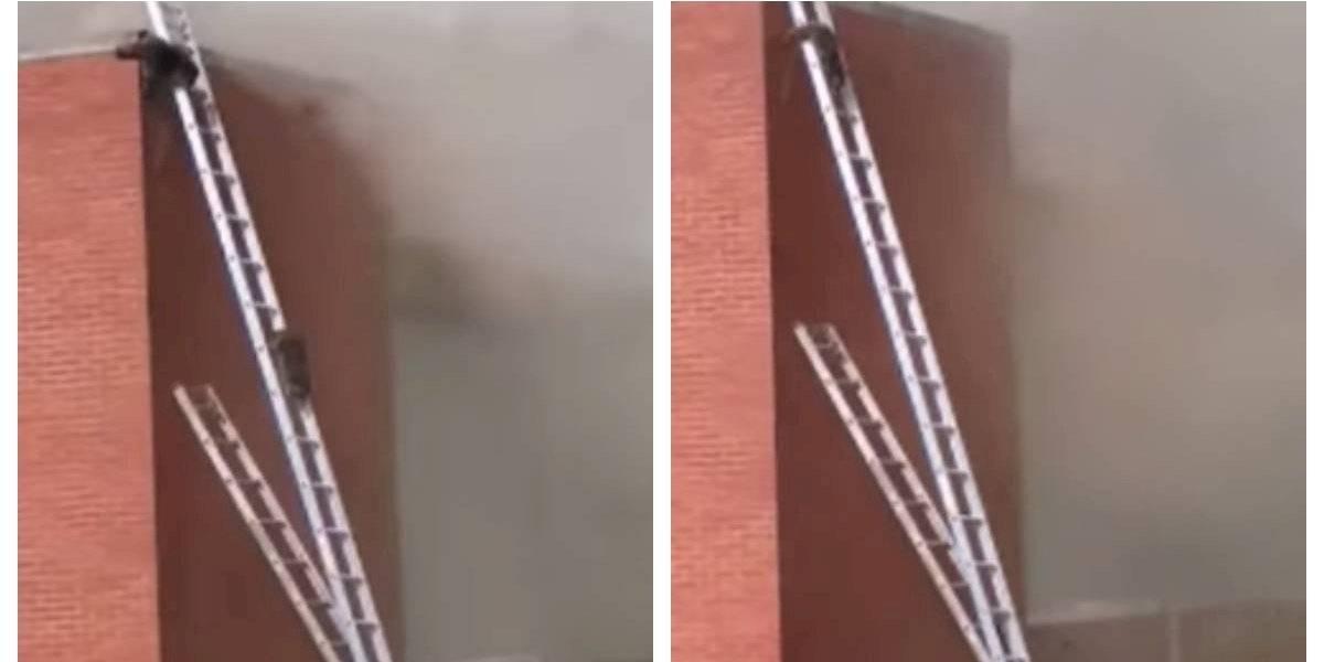 """""""Ustedes son increíbles"""": se quemaba un almacén y bomberos se dio tiempo para """"rescatar"""" a dos mapaches que estaban atrapados en el techo"""