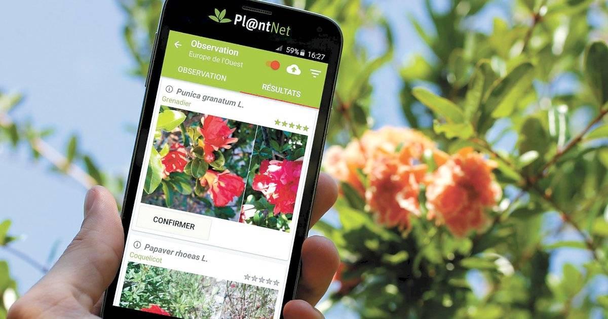 PlantNet Identificação Planta (Pl@ntNet)