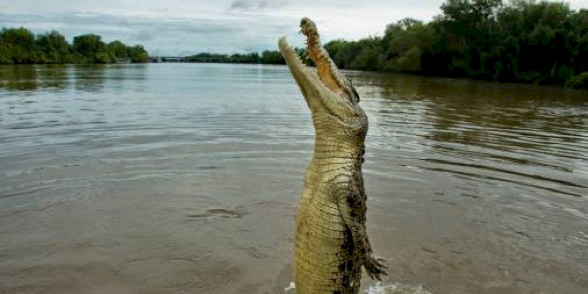 Un cocodrilo mata y se come a un niño de 10 años