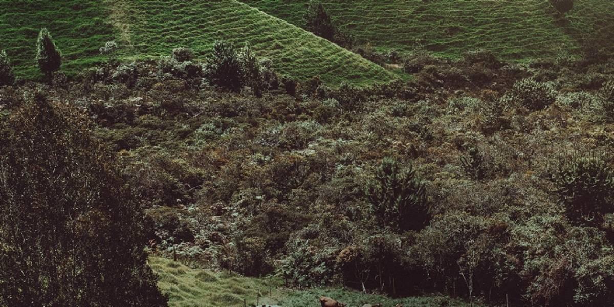 Así se salvaron más de 25.000 árboles de ser talados en Colombia