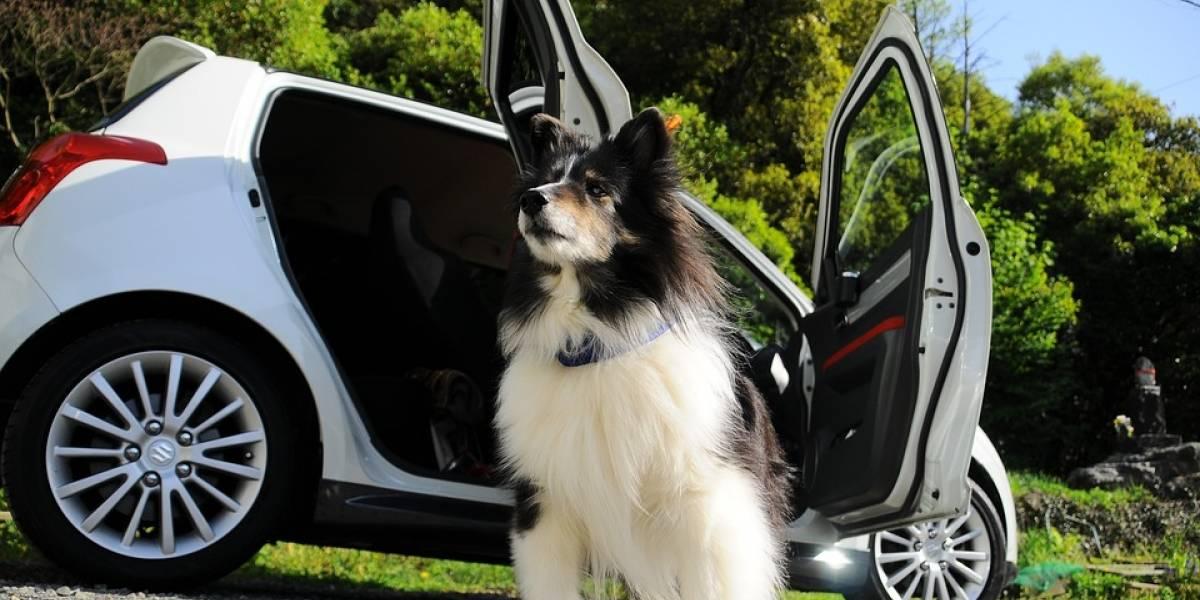 6 accesorios para que tus mascotas viajen seguras en el automóvil