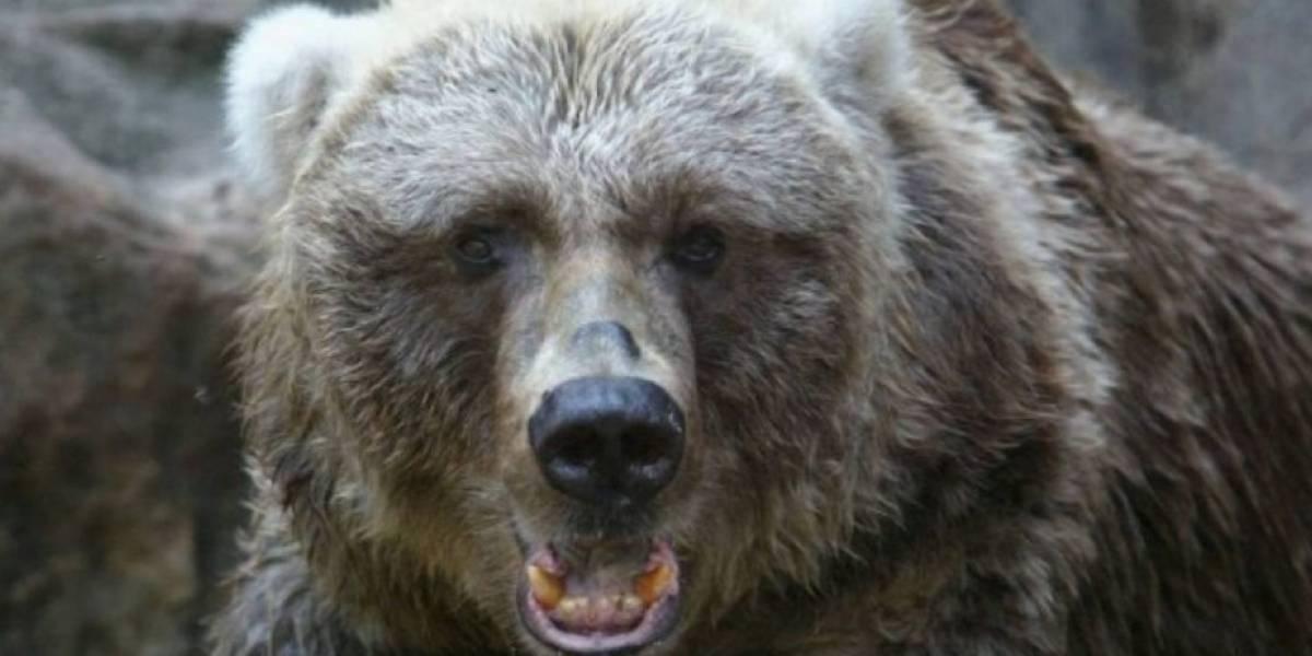 Menor de 13 años fue atacado por un oso mientras estaba de campamento