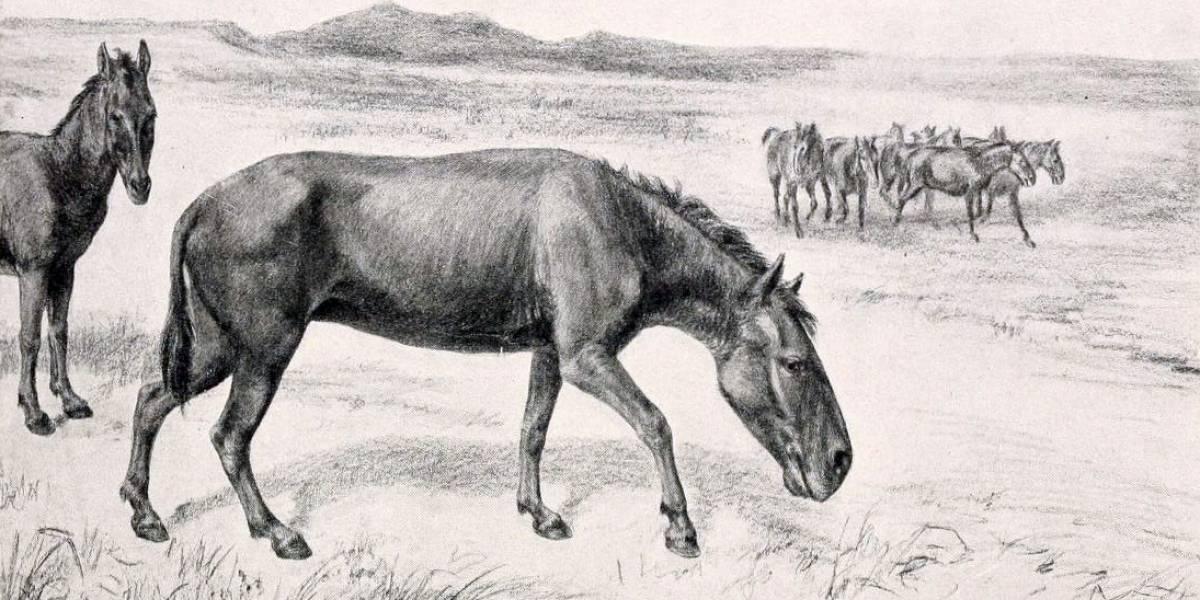 Sería un indicio para los mamíferos grandes de hoy: estudian la desaparición del caballo prehistórico en Chile y Sudamérica hace 10 mil años