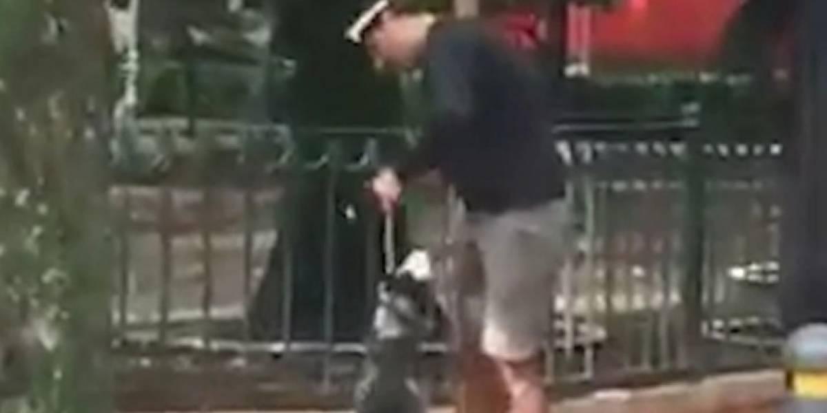 ¡Indignante! Paseador de perros ahorca a un husky siberiano hasta desmayarlo
